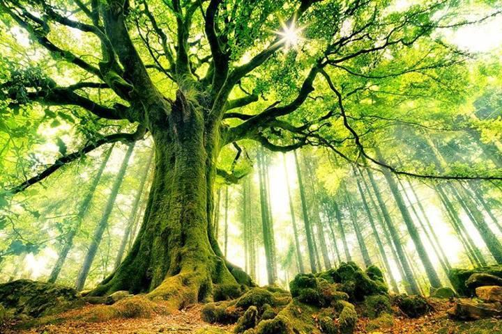 ichuan københavn stå som træ
